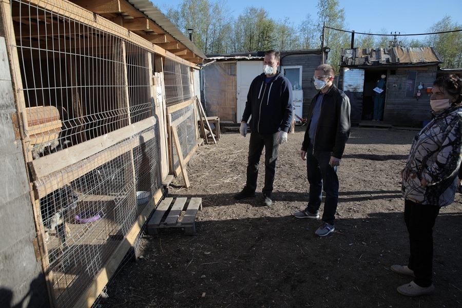 Михаил Романов передал приюту для бездомных животных «Мурка и барбос» 100 кг корма
